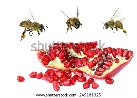 Ripe pomegranate fruit opened ready to eating and honey bees. Isolated on white background  - stock photo