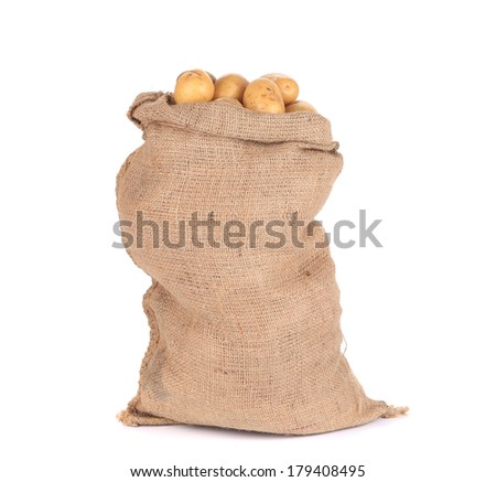 Ripe potatoes in burlap sack. Isolated on a white background. - stock photo