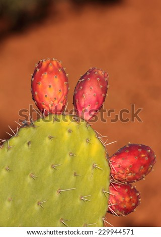 Ripe Prickly pear or paddle cactus and red fruit against a natural background. Cactaceae, Opuntia (botanical) - stock photo