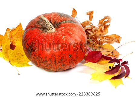 Ripe pumpkin and autumn leaves. Isolated on white background - stock photo