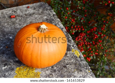 Ripe pumpkin on a stone bench against a background of red cotoneaster berries - stock photo