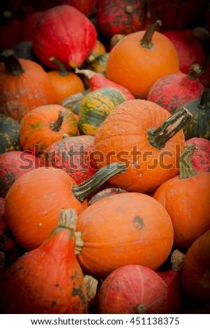 ripe pumpkin on the market - stock photo
