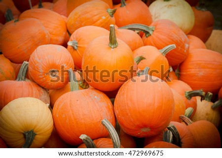 ripe pumpkin on the market