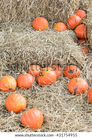 Ripe pumpkin pile on the hay for decoration in the countryside farm. - stock photo