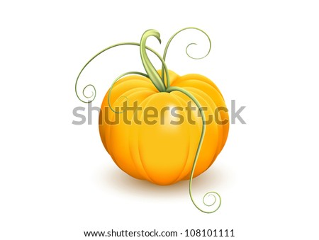 Ripe pumpkin with tendrils on white background. Vector version available in my portfolio - stock photo