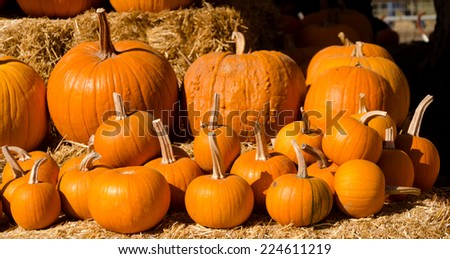 Ripe pumpkins background  - stock photo