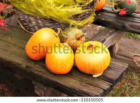 Ripe pumpkins on wooden bench - stock photo