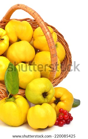 Ripe quince in the basket isolated on white - stock photo