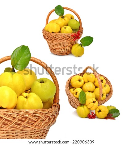 Ripe quince in the basket isolated on white. Collage - stock photo
