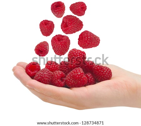 Ripe raspberries in a palm of a hand  isolated on white background cutout - stock photo