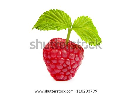 Ripe raspberry with green leaf on white background. Close up macro shot. Image was professionally retouched - stock photo
