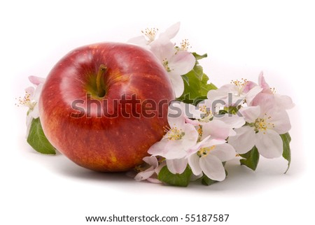 Ripe Red Apple and apple-tree blossoms on a white background - stock photo