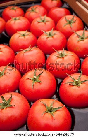 Ripe, red, organic tomatoes at the local farmers market - stock photo