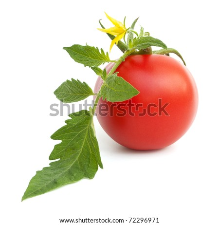 Ripe red tomato with leaf and flower on the white background - stock photo