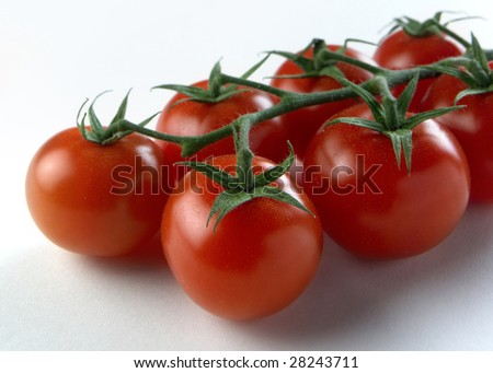 Ripe red tomatoes on the vine with white background - stock photo