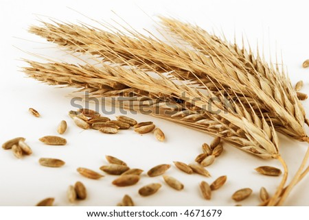 ripe rye ears and  seeds  on white background - stock photo