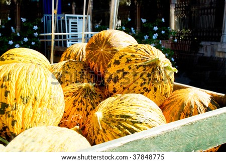 Ripe spotted round yellow Turkish delicious melons. - stock photo