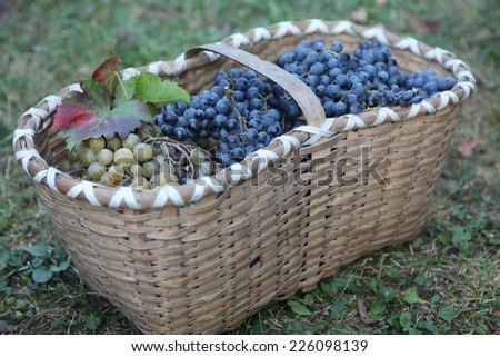ripe sweet grapes in basket - stock photo