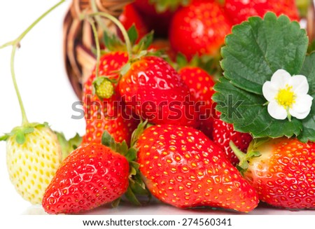 Ripe sweet strawberries scattered from the wicker basket isolated on white background - stock photo