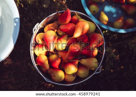 Ripe tasty pears in a bucket top view - stock photo