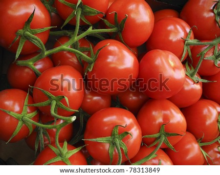 Ripe Tomatos - stock photo