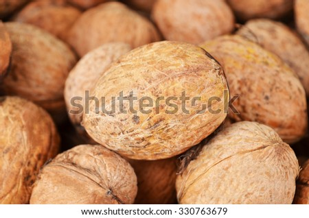 Ripe walnut (Juglans regia), close up, DOF - stock photo
