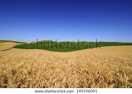 ripe wheat fields in Palouse, Washington State, USA - stock photo