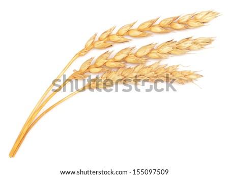 ripe wheat isolated on white background - stock photo