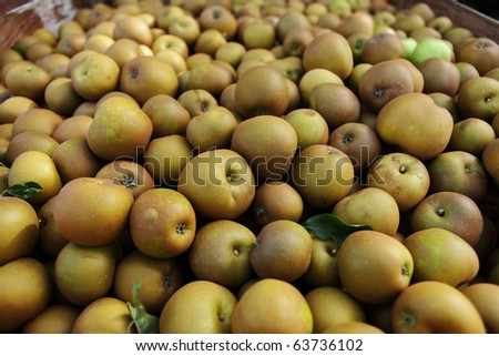 Ripe winsor apples from the orchard - stock photo