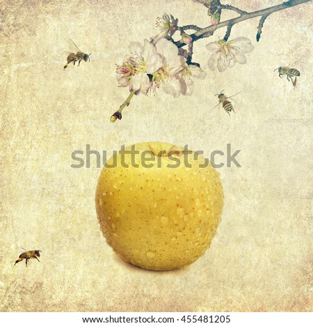 Ripe yellow apple covered with water drops, apple tree blossom branch and flying honey bees on the old paper textured background. Orchard and honeybees. Pollination and fruit. Harvesting - stock photo