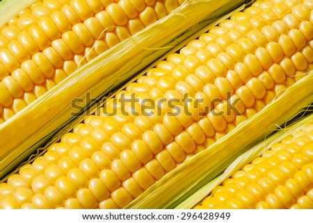 Ripe yellow corn, top view, food background, selective focus - stock photo