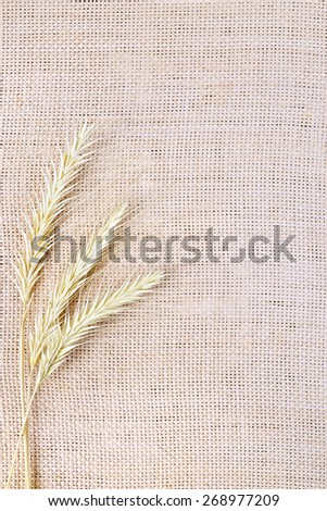 Ripe yellow ears of corn on a background of rough cloth of burlap - stock photo