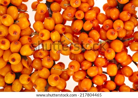 ripen sea buckthorn berries  (Hippophae rhamnoides) close up top view surface on white background - stock photo