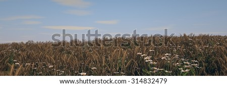 ripen wheat field landscape - stock photo