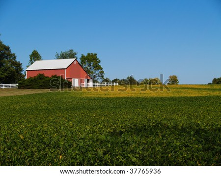 Ripening soybean field in front of red barn beneath a clear blue sky. - stock photo