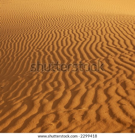 Ripples in the sand in the Coral Pink Sand Dunes Park, Utah lit by the setting sun. - stock photo