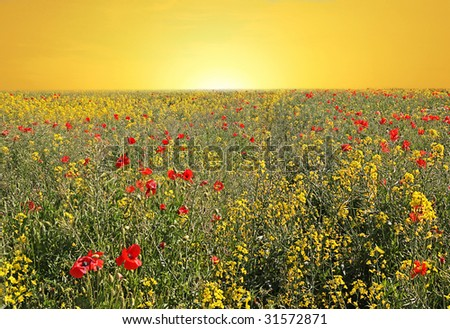 Rise and shine, a stunning Summer sunrise over canola and poppy field in England - stock photo