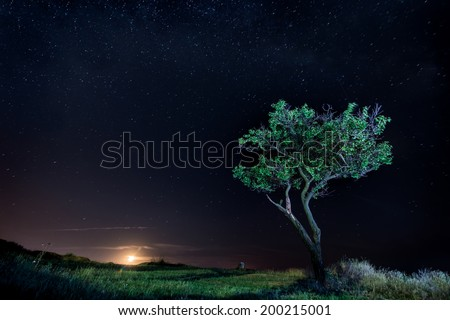 Rise of the new moon. Lonely tree standing under the stars of the universe milky way on the sea shore at night. Green grass light rays of the moon. - stock photo