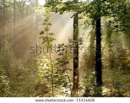 Rising sun falling into the misty autumn forest with maple branches in the foreground. - stock photo