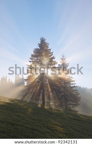 rising sun rays between the tree at foggy morning - stock photo
