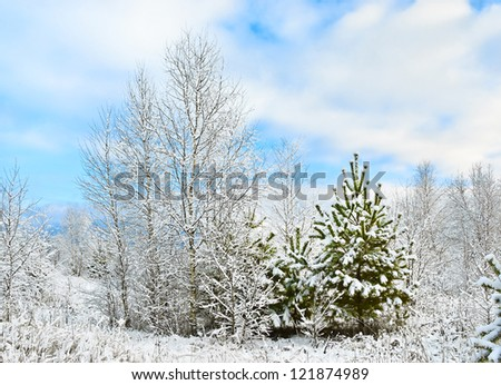 Rising woods covered with first snow - stock photo