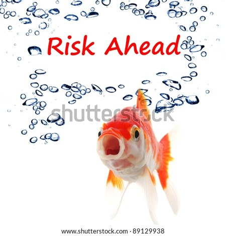 risk ahead or management concept with goldfish