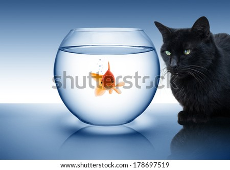 rivalry concept: fish and cat - stock photo