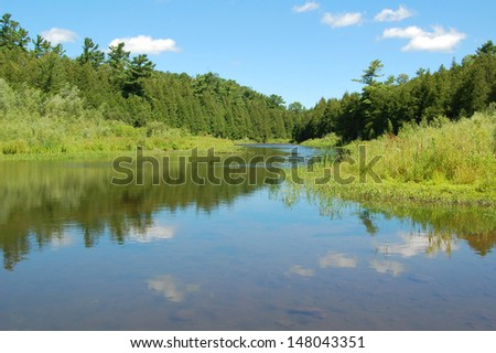 River and forest - stock photo