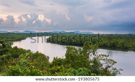 River and mangrove in Thailand - stock photo