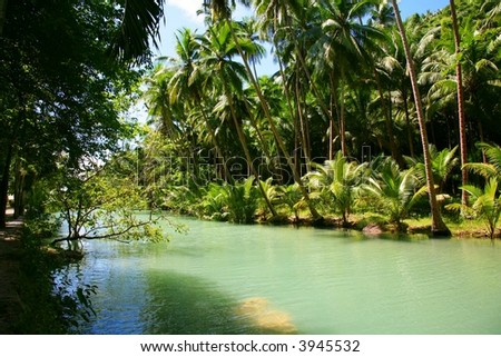 river  and palm trees
