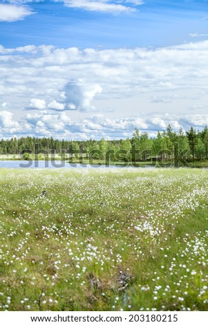 River bank in marshy evergreen forests of Karelia - stock photo