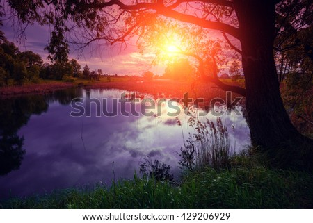 River bank with trees at sunset light
