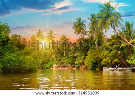 river, beautiful sunrise and tropical palms - stock photo