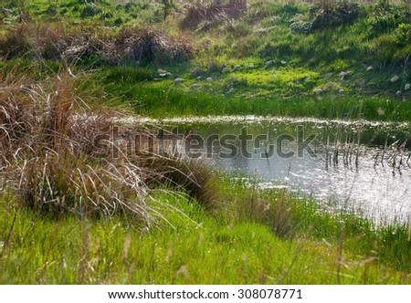 River between reed-bed in summer. - stock photo